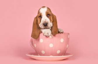 How To Pick The Right Basset Hound Names For Your Pets