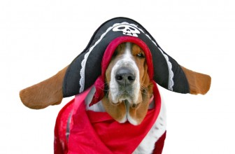 Must-Have Basset Hound Dog Clothes and Merch for Holiday Season!