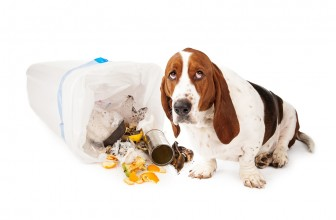 Basset Hound Obedience Training Tips For Dummies