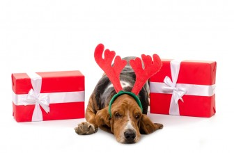 The Best Gifts For Basset Hound Owners (And Others Who Just Plain Love Them!)