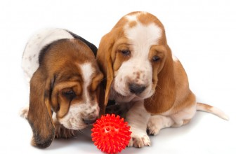 What Are The Top 5 Best Toys For Basset Hound?