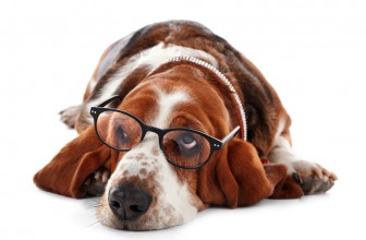 Common Basset Hound Eye Problems Your Pet Might Have
